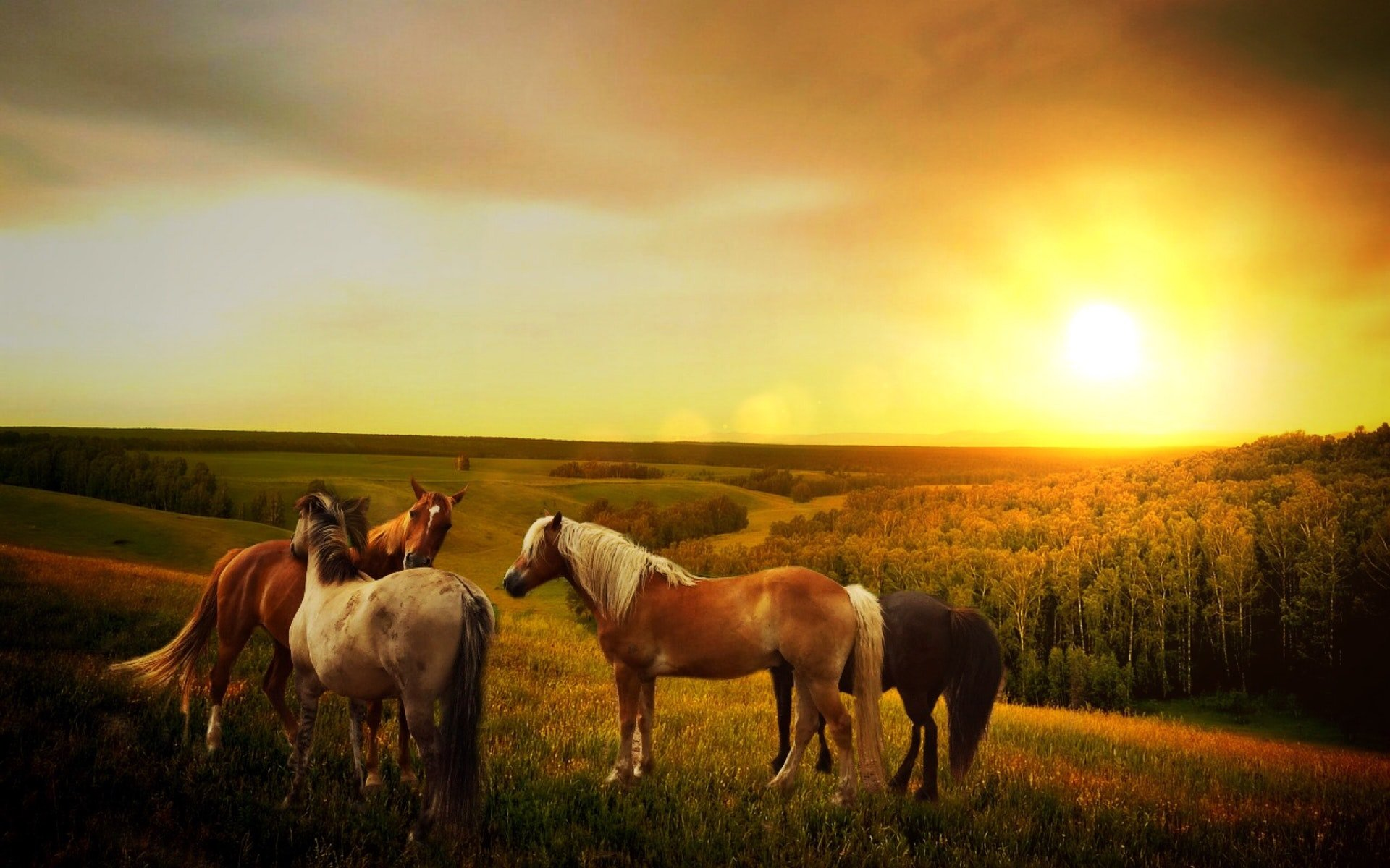 Horses in a field with sunset